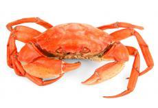 嘉堡服务:备孕孕期,能不能吃螃蟹?